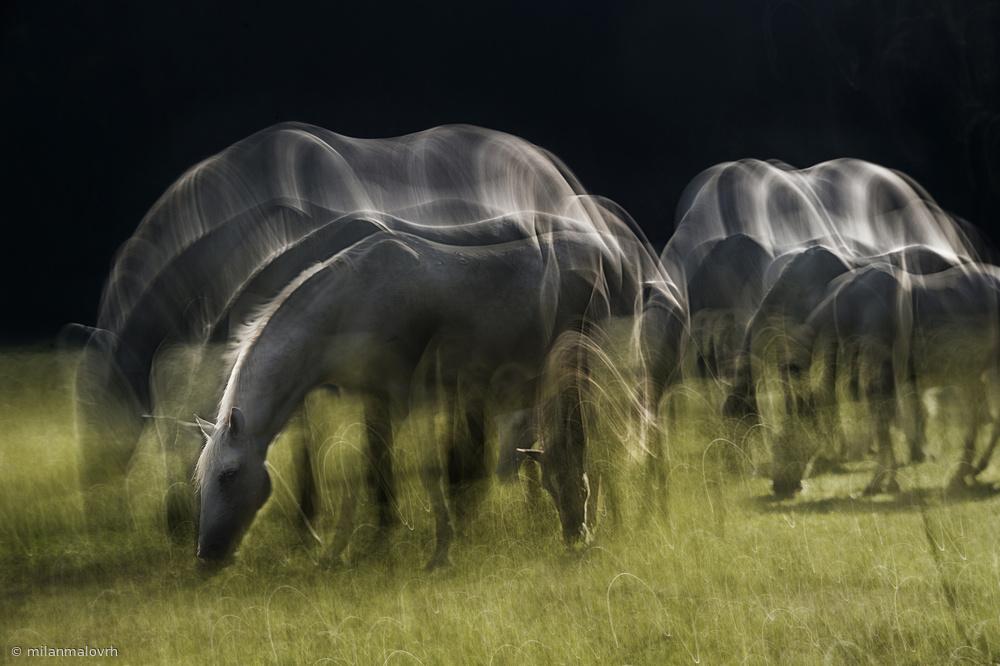 Fotokonst Echoes of light