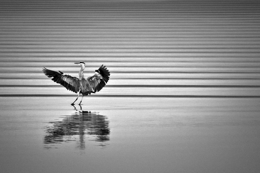 Fotokonst Heron !
