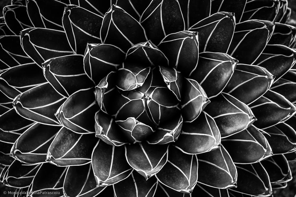 Fotokonst Natural math