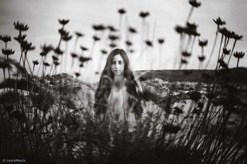 Fotokonst Where The Wild Roses Grow