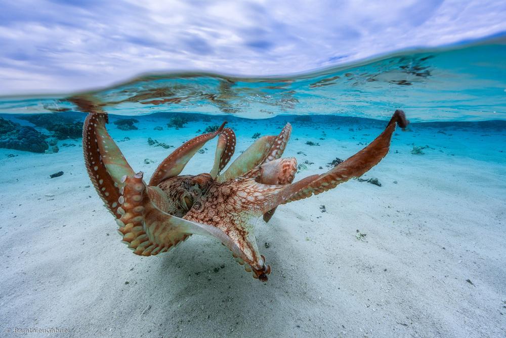 Fotokonst Octopus