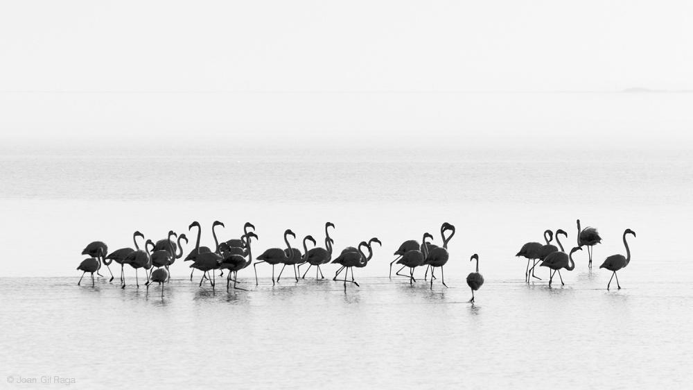 Fotokonst Flamingos