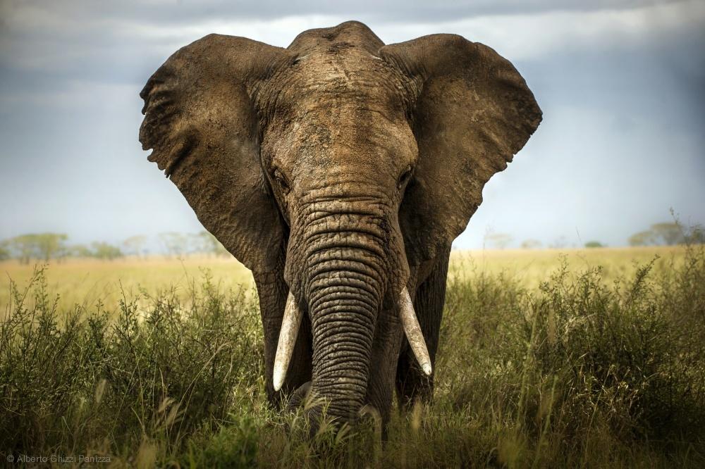 Fotokonst Encounters in Serengeti