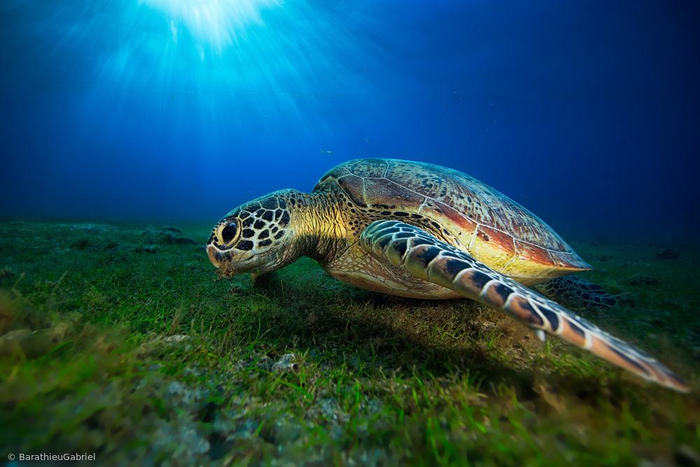 Fotokonst Green turtle