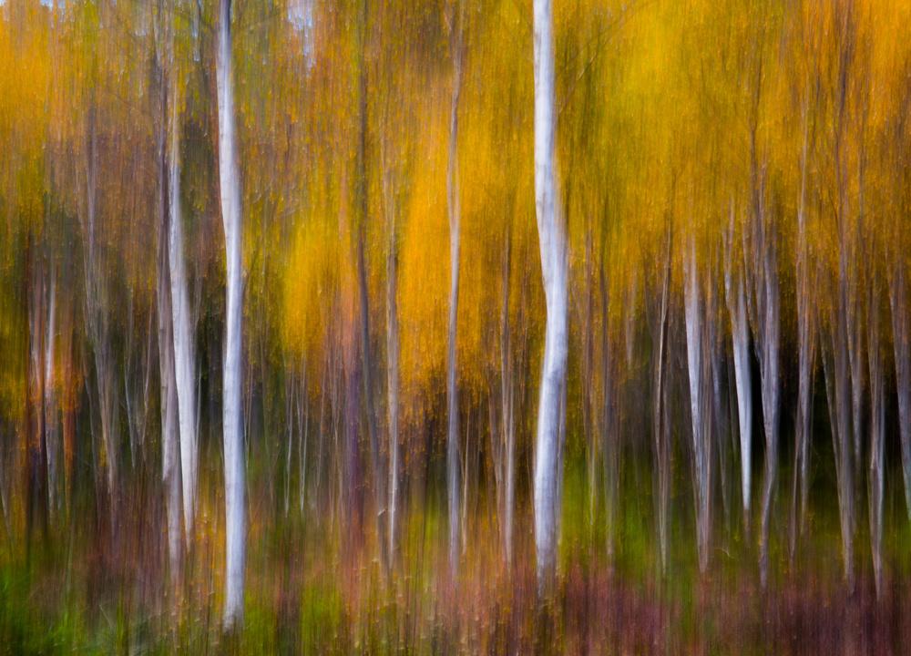 Fotokonst Abstract Fall