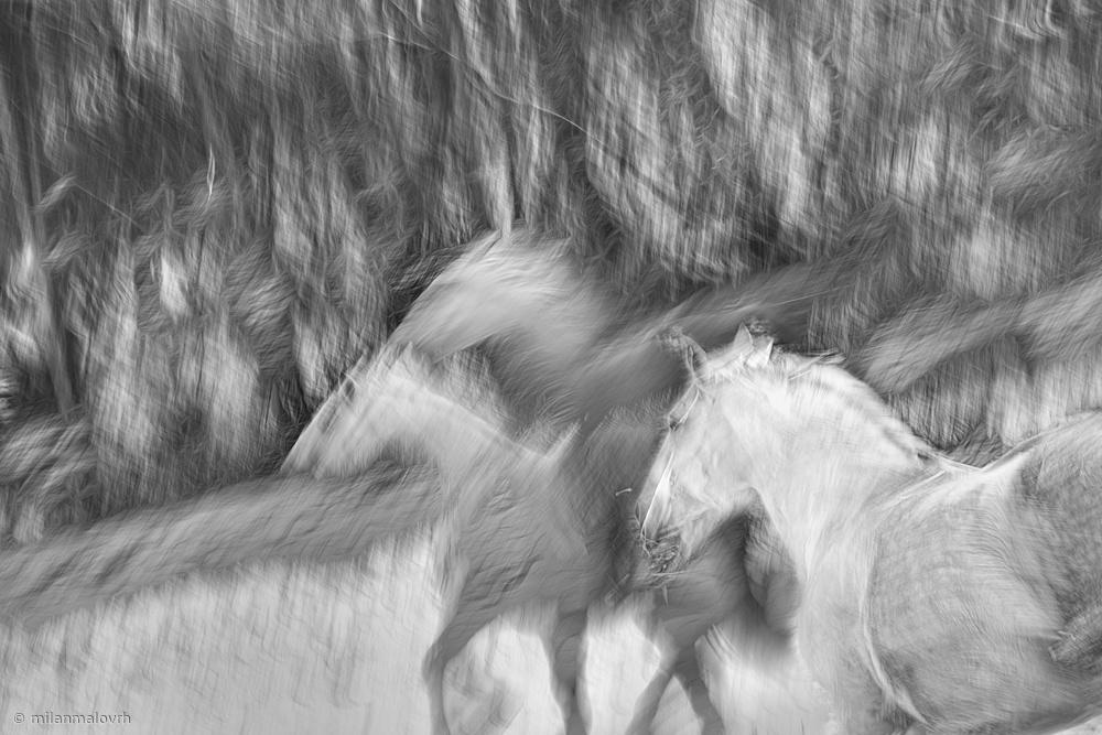 Fotokonst Black and white winter
