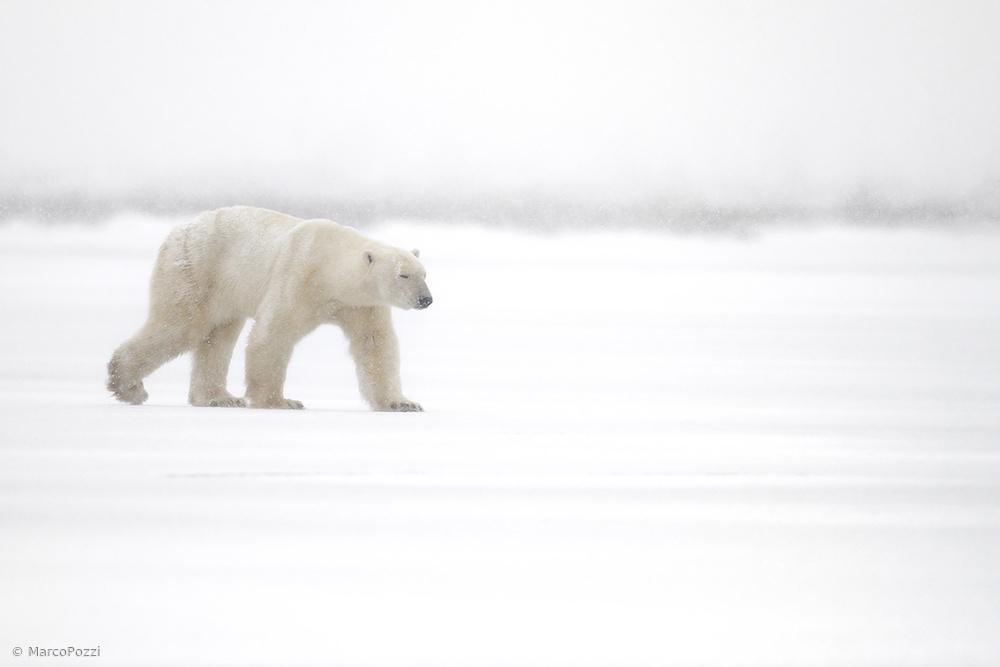 Fotokonst Walking in the snow