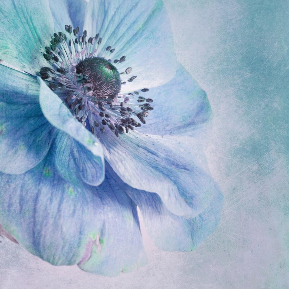 Fotokonst Shades of Blue