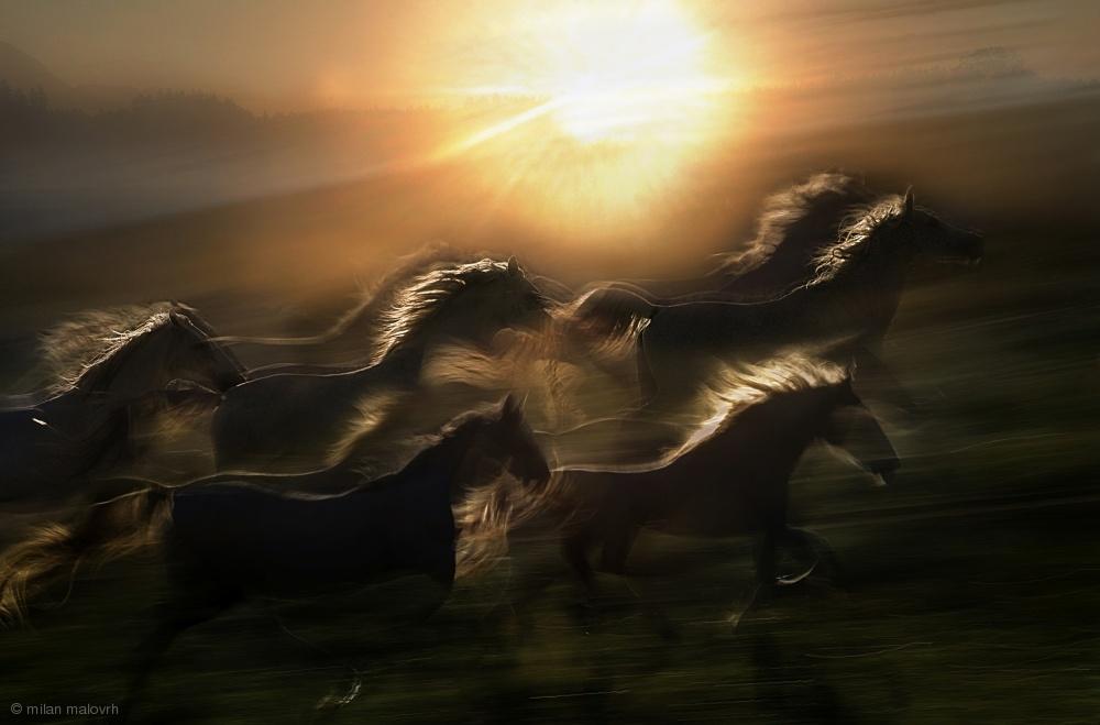 Fotokonst morning  gallop