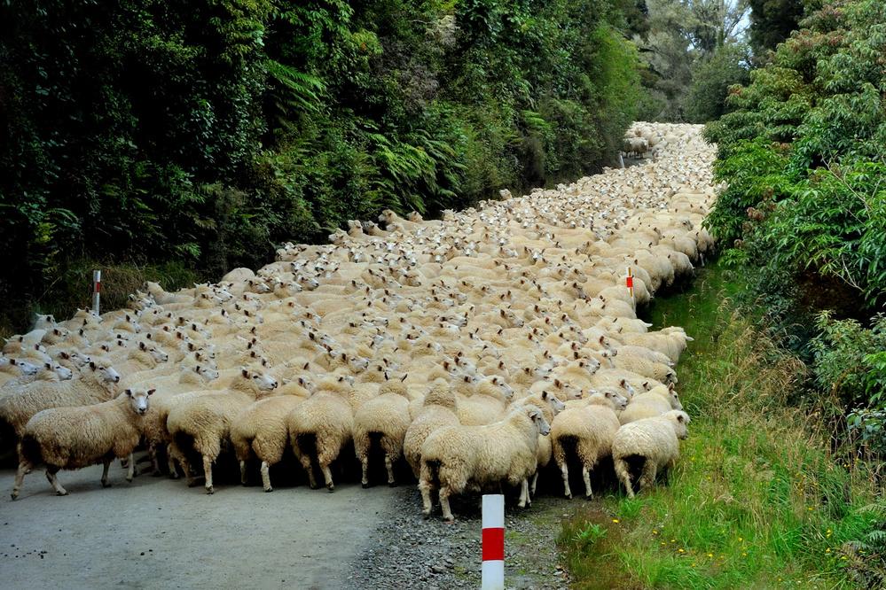Sheep River