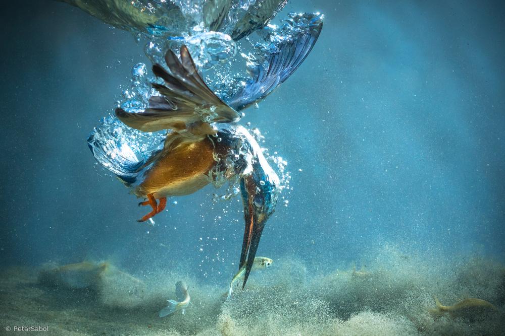 Fotokonst The Kingfisher