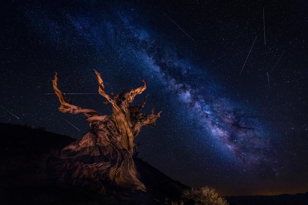 Fotokonst Shooting Stars Night