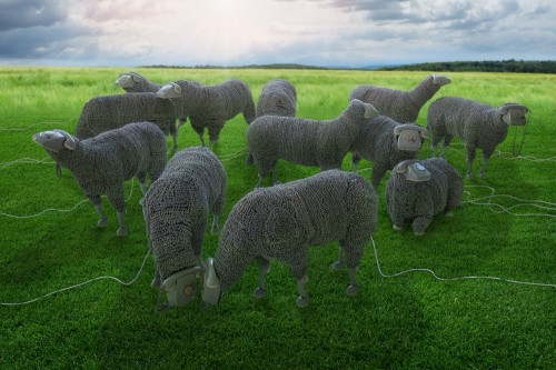 Just Jean Luc Cornec's sheeps in freedom by John Wilhelm
