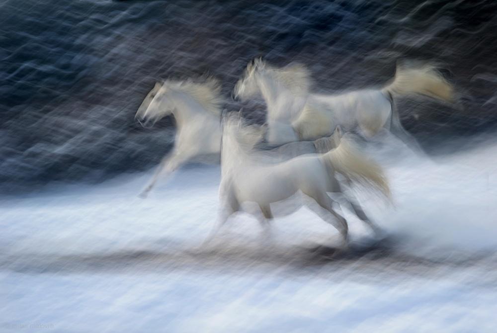 Fotokonst Winter joy