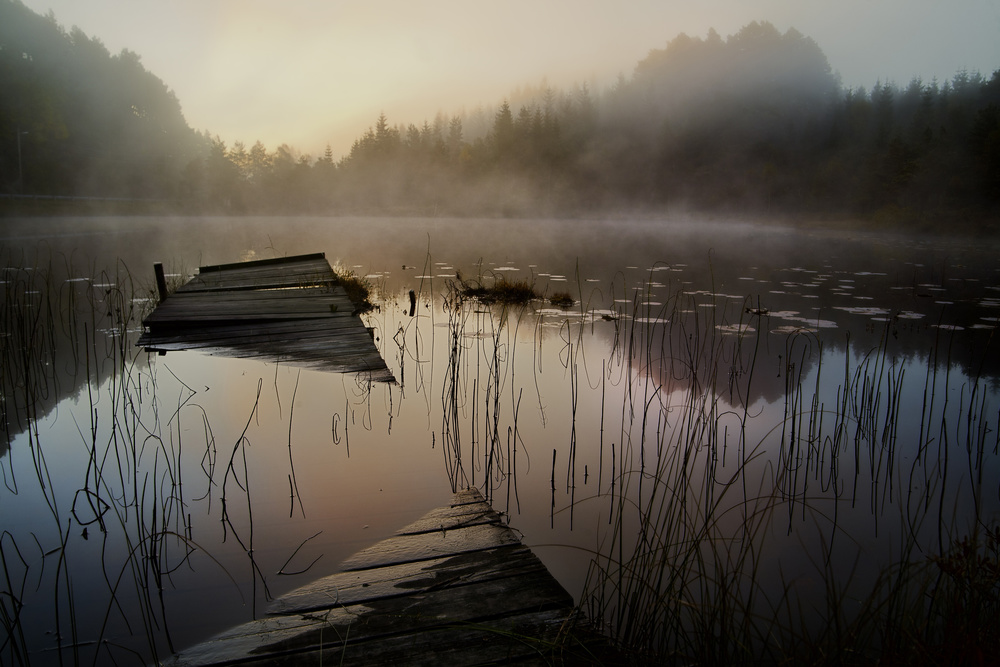 Fotokonst In the misty morning