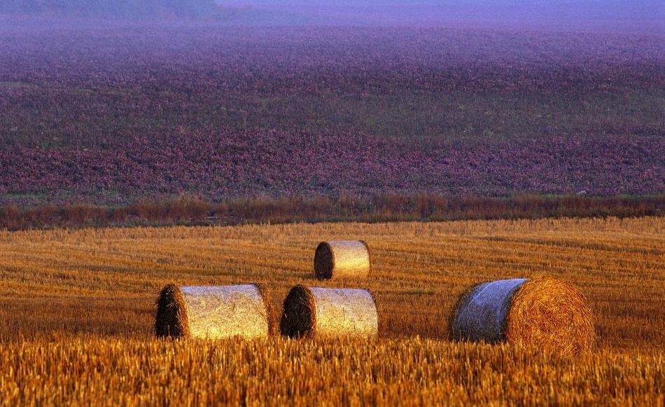 Poster Farmers field