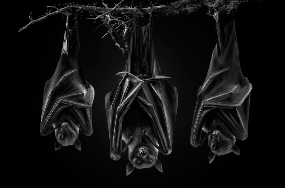 Fotokonst The Sect