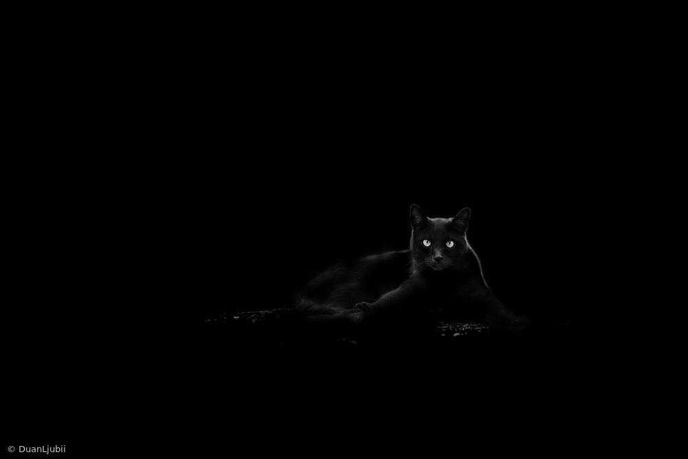 Fotokonst Cat