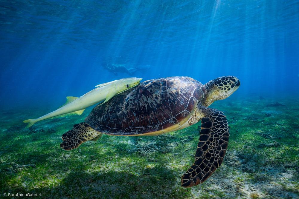Fotokonst Sea Turtle