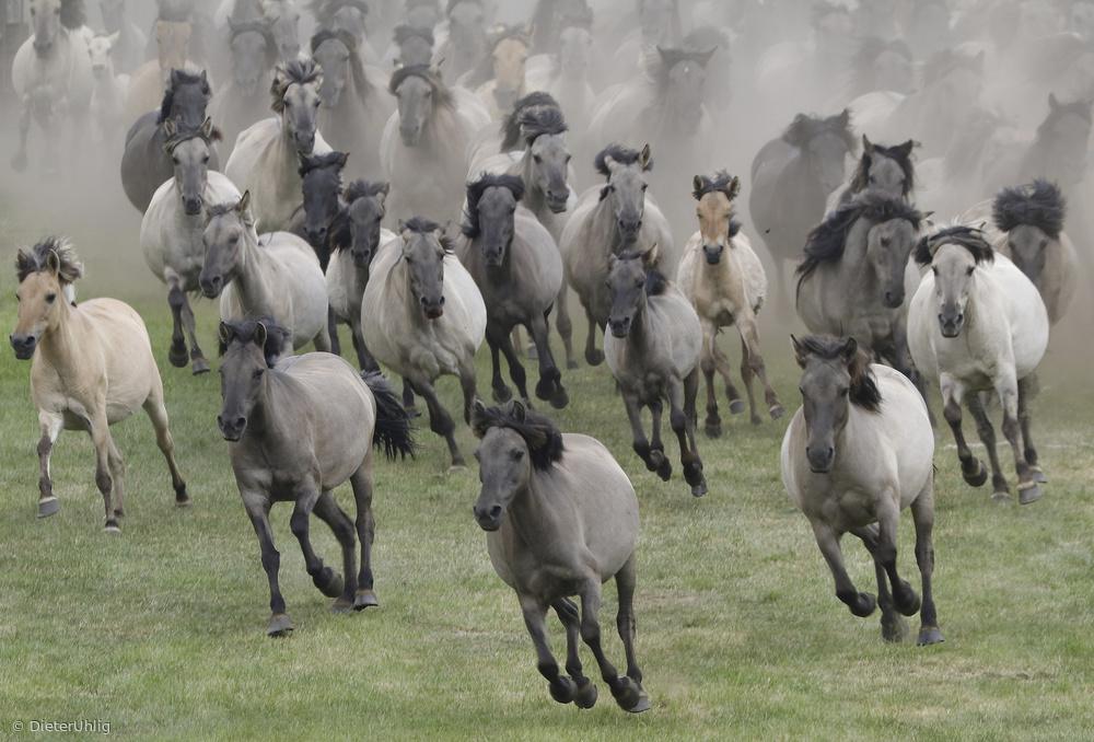 Fotokonst Wild horses