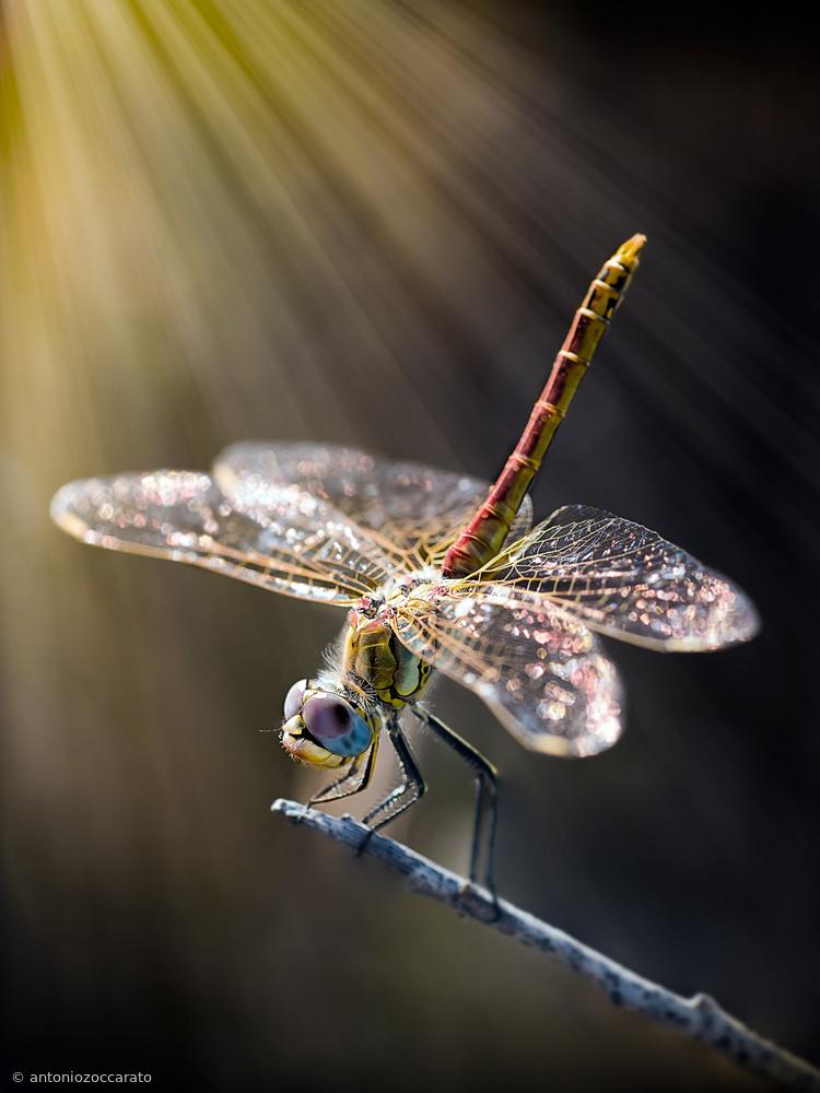 Fotokonst dragonfly 3