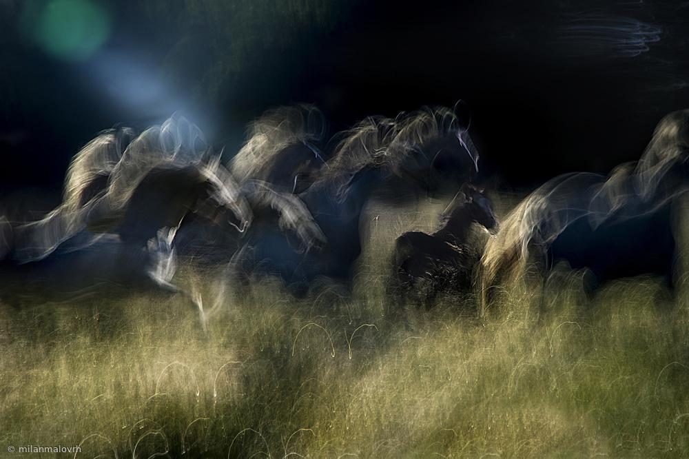 Fotokonst Action horses