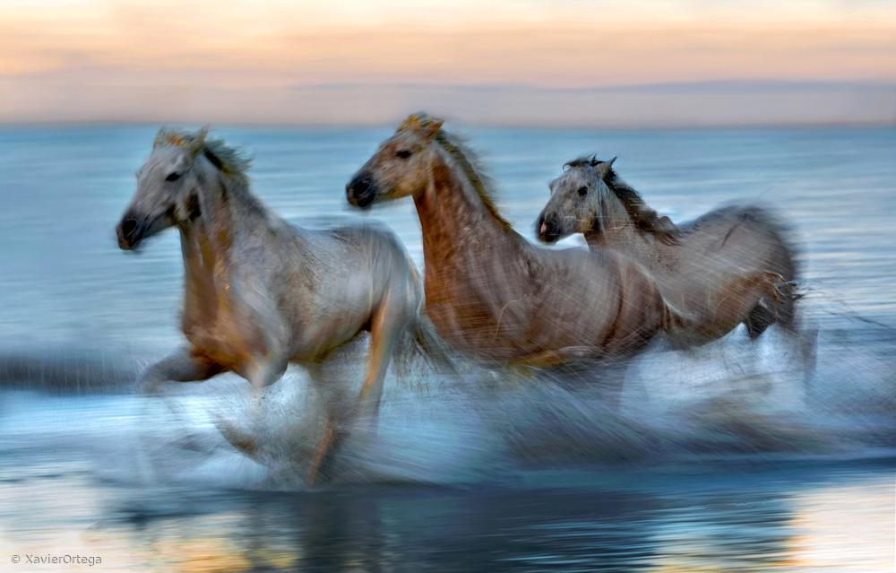 Fotokonst Slow motion horses