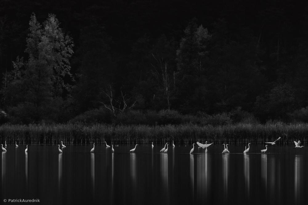 Fotokonst Birds