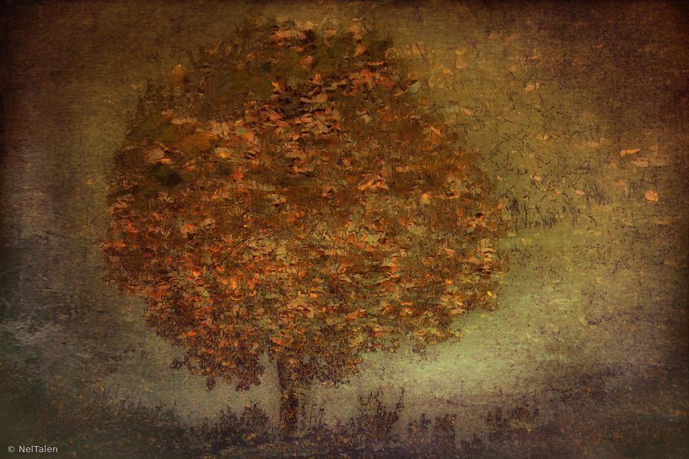Fotokonst Autumn Tree