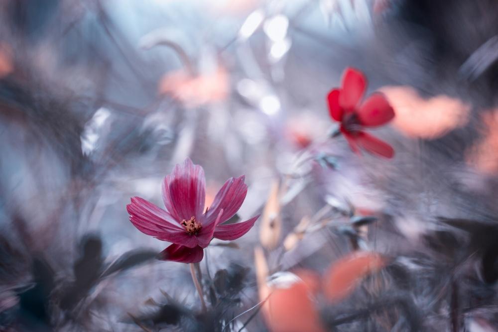 Poster Une autre fleur, une autre histoire