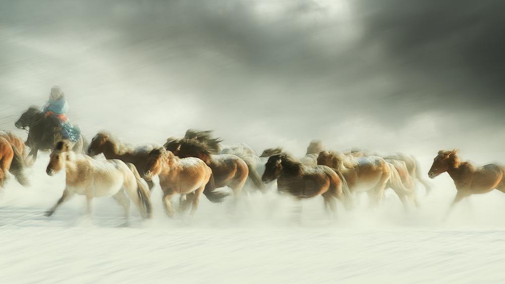 Poster Horses gallop