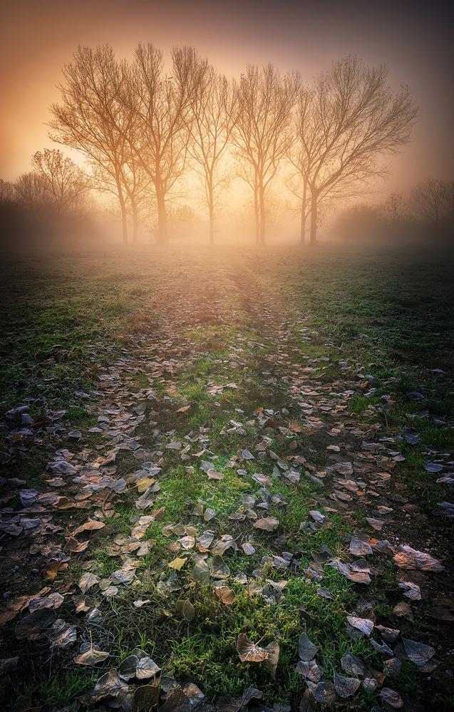 Fotokonst Misty Morning