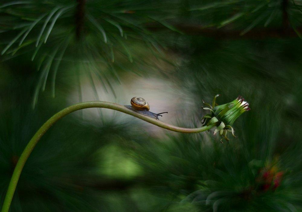 Fotokonst Forest nook
