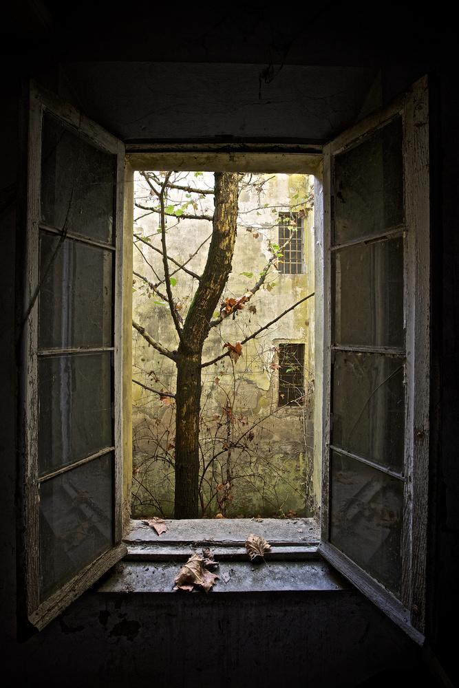 Autumn in asylum