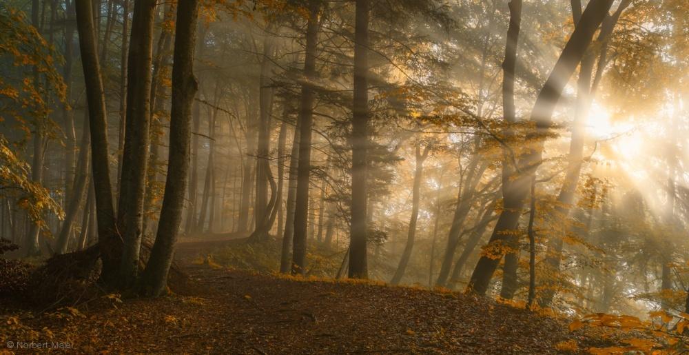 Fotokonst Forest Light