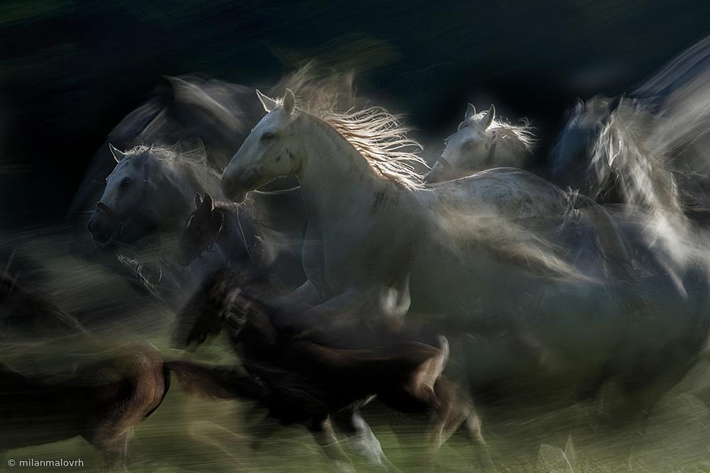 Fotokonst gallop