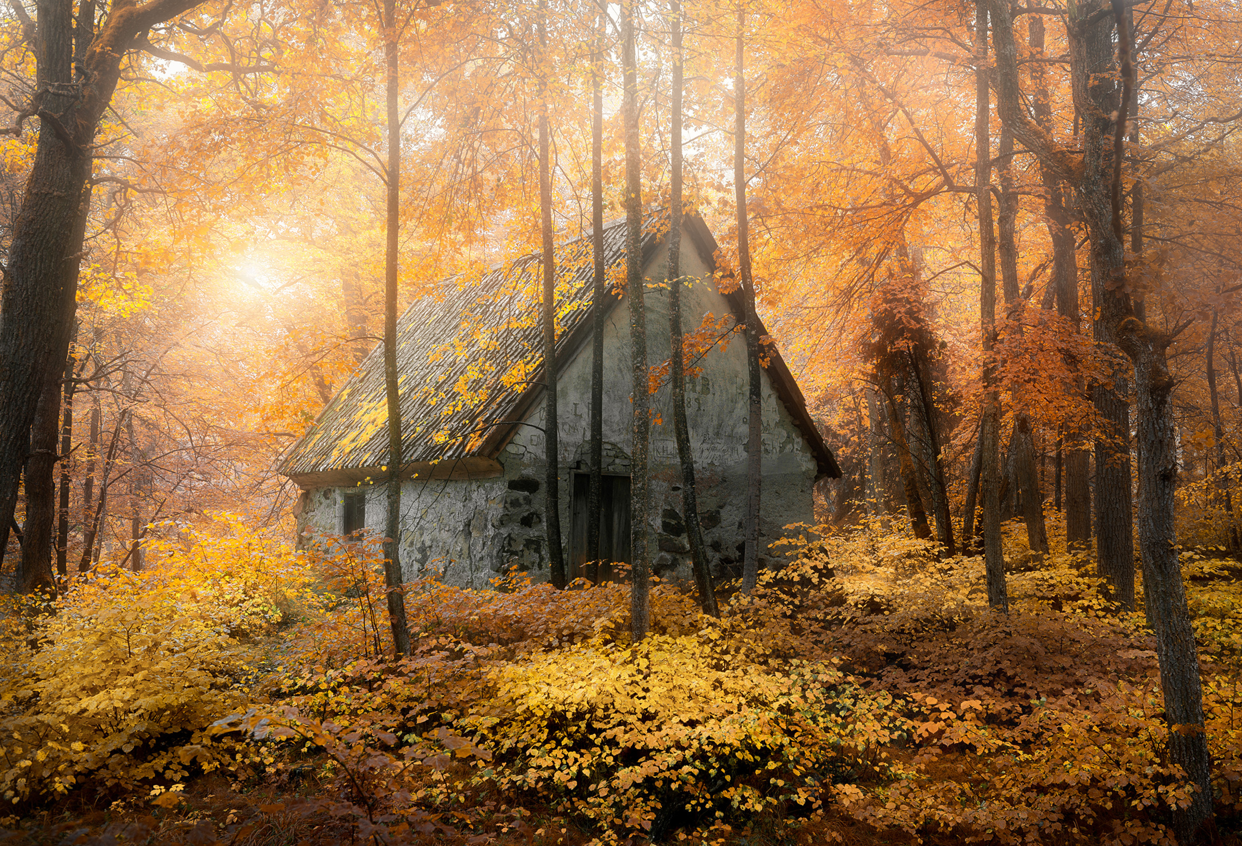House in the forest during fal