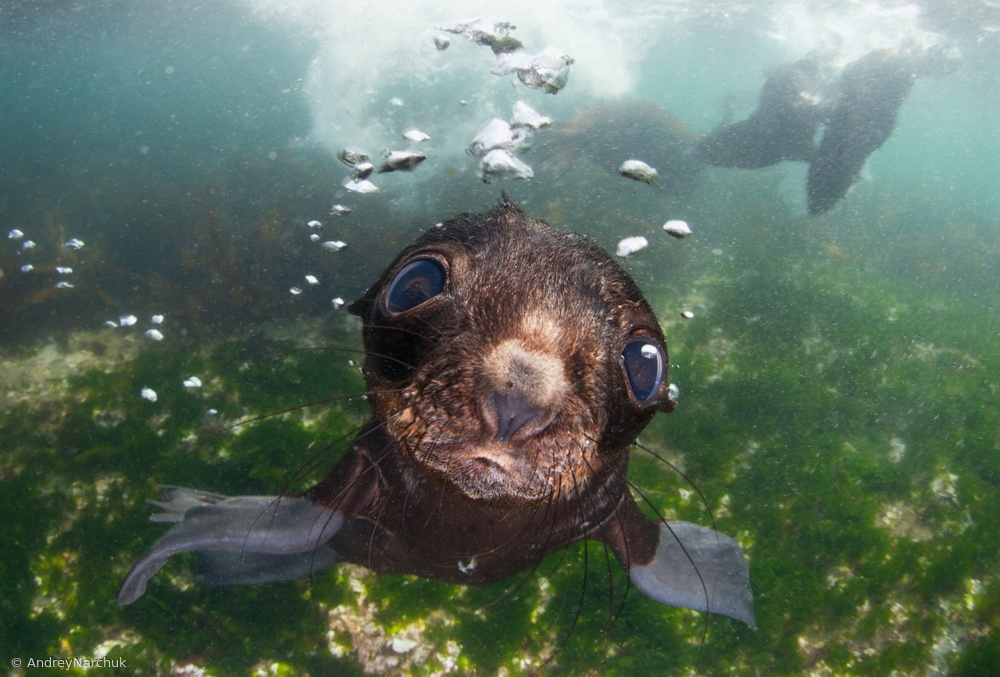 Fotokonst baby of the sea