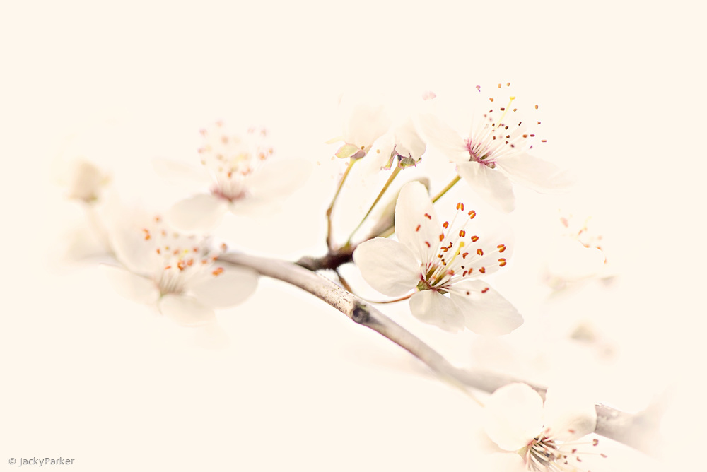 Fotokonst Harmony of Spring