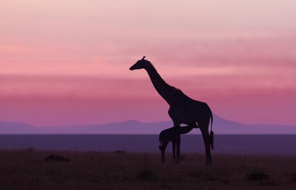 Fotokonst Good morning Masai Mara 7