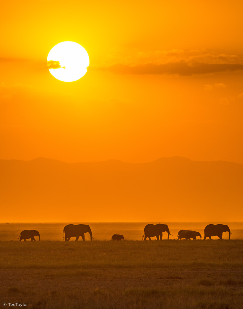 Fotokonst Elephants at Sunset