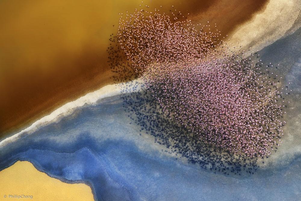 Fotokonst Fly over the lake