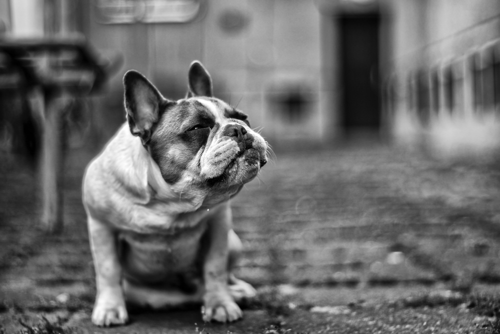 Fotokonst DOG