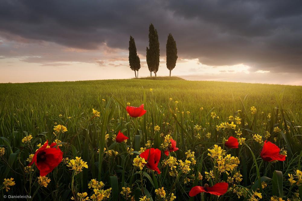 Fotokonst Blooming Tuscany
