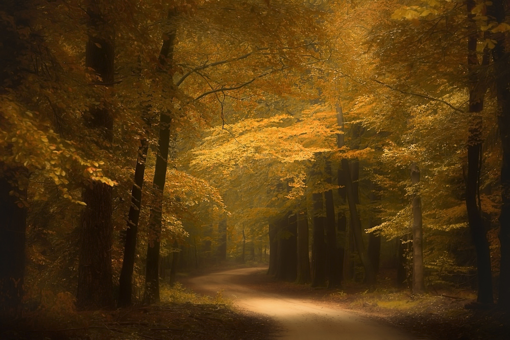 Fotokonst Golden forest