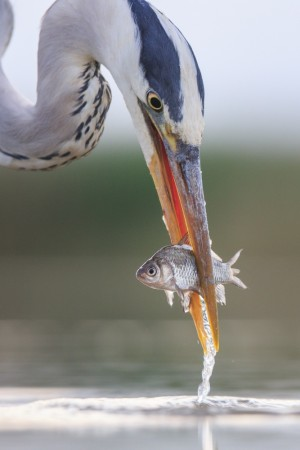 Freshly caught! by Andreas Hemb