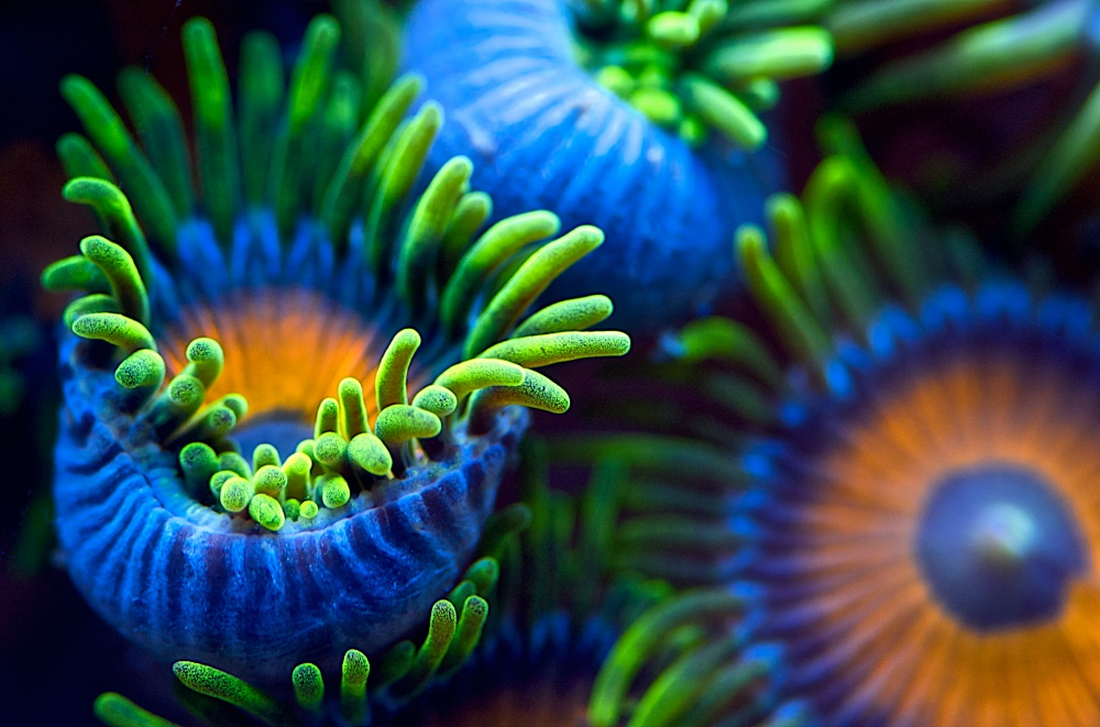 Poster The colors of the reef II