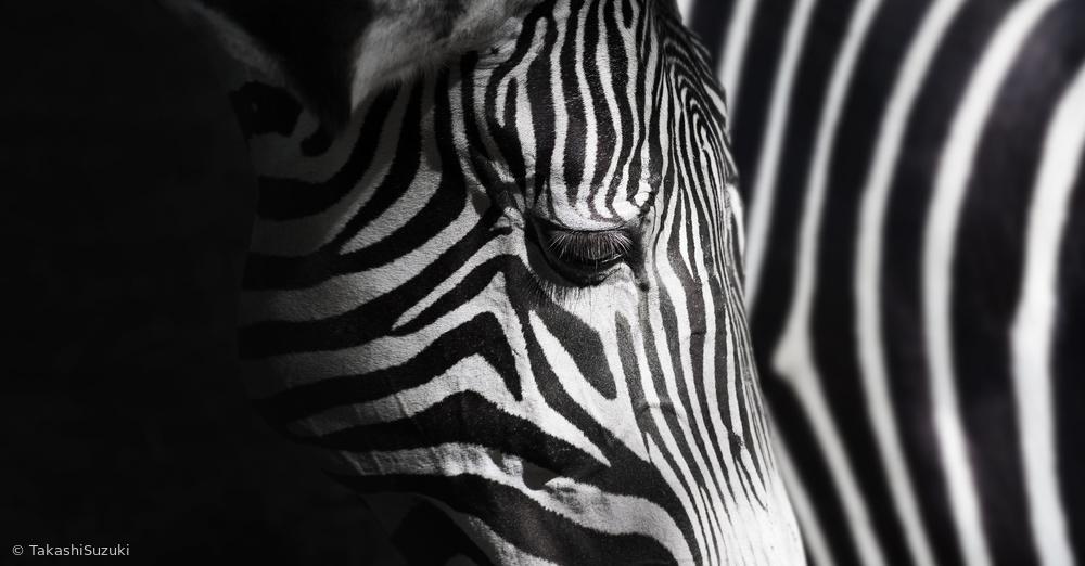Fotokonst Overlap of stripes