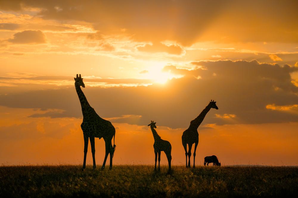 Fotokonst Golden Africa