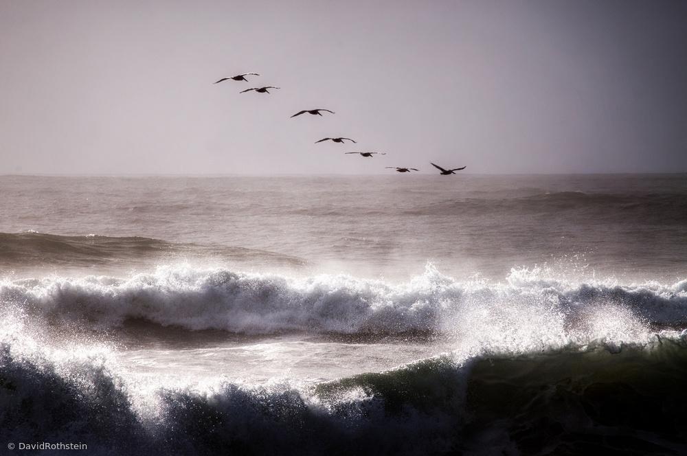 Fotokonst Pelicans